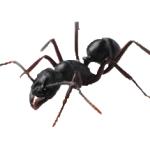 formigas-2